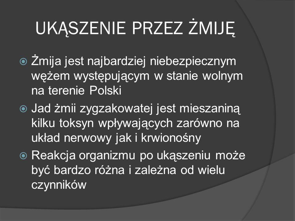 UKĄSZENIE PRZEZ ŻMIJĘ Żmija jest najbardziej niebezpiecznym wężem występującym w stanie wolnym na terenie Polski Jad żmii zygzakowatej jest mieszaniną