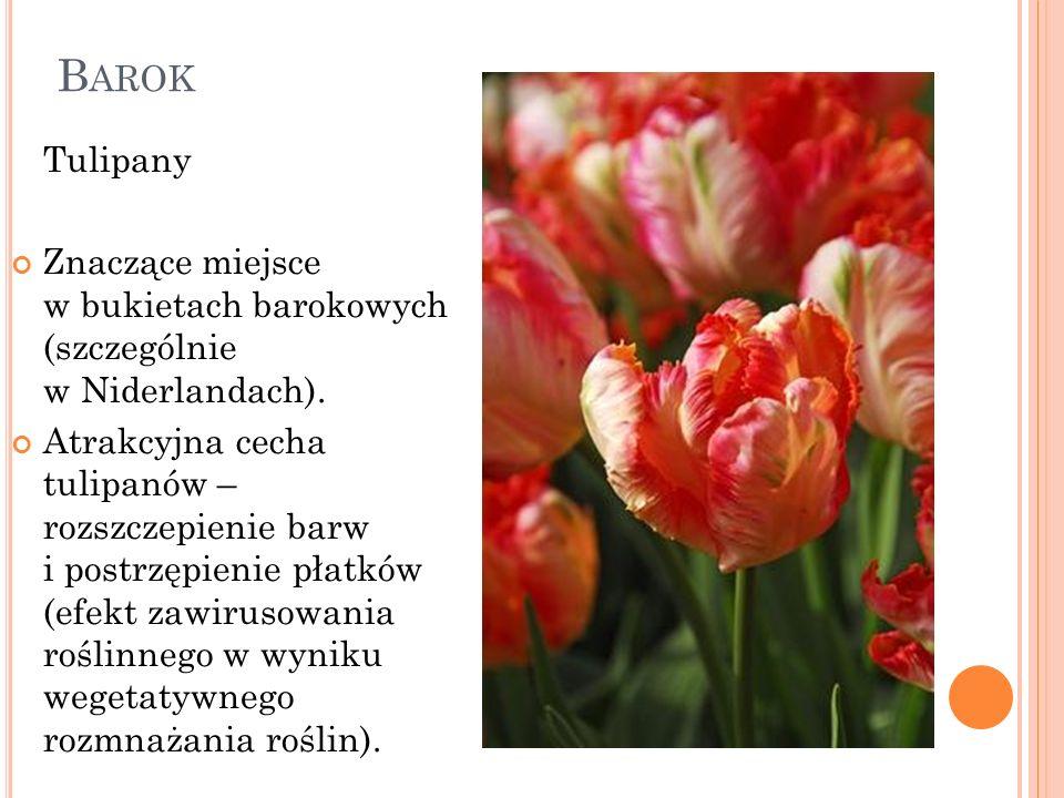 B AROK Tulipany Znaczące miejsce w bukietach barokowych (szczególnie w Niderlandach). Atrakcyjna cecha tulipanów – rozszczepienie barw i postrzępienie