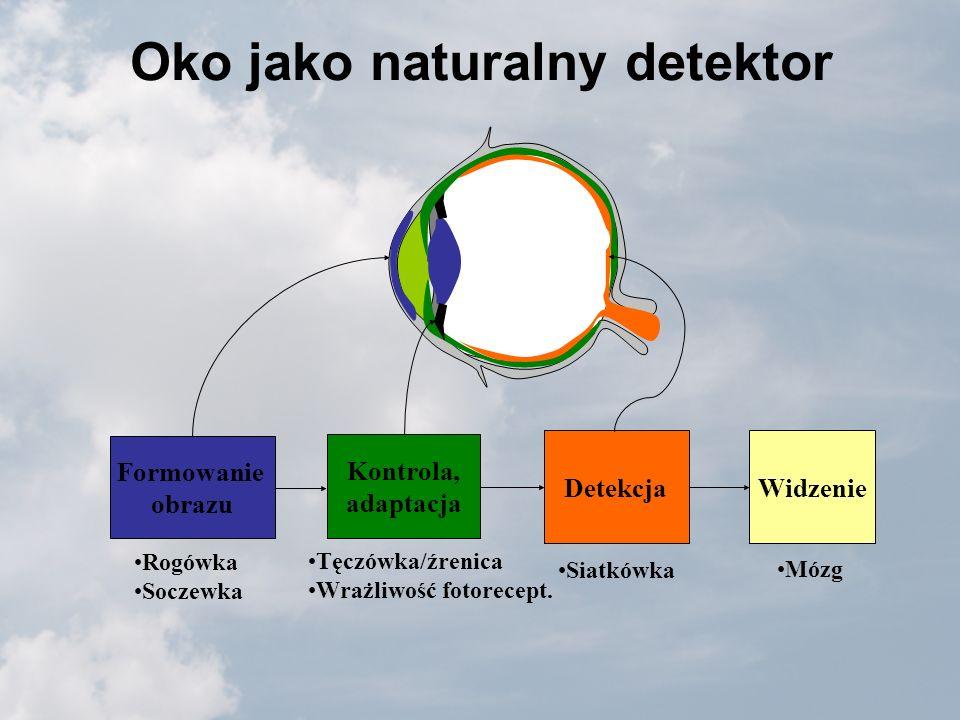 Oko jako naturalny detektor Formowanie obrazu Kontrola, adaptacja DetekcjaWidzenie Rogówka Soczewka Tęczówka/źrenica Wrażliwość fotorecept. Siatkówka