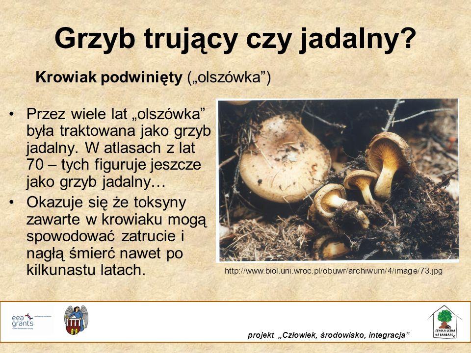 Rola grzybów w przyrodzie Wsparcie udzielone przez Islandię, Liechtenstein i Norwegię poprzez dofinansowanie ze środków Mechanizmu Finansowego Europejskiego Obszaru Gospodarczego Wnioskodawca i współfinansowanie Gmina Miasta Toruń projekt Człowiek, środowisko, integracja Grzyby to saprotrofy – rozkładają martwą materię organiczną na proste przyswajalne dla roślin związki nieorganiczne Są pokarmem dla wielu gatunków zwierząt Są miejscem rozwoju wielu gatunków bezkręgowców Mikoryza umożliwia prawidłowy rozwój roślin, czasem wręcz go warunkuje np.