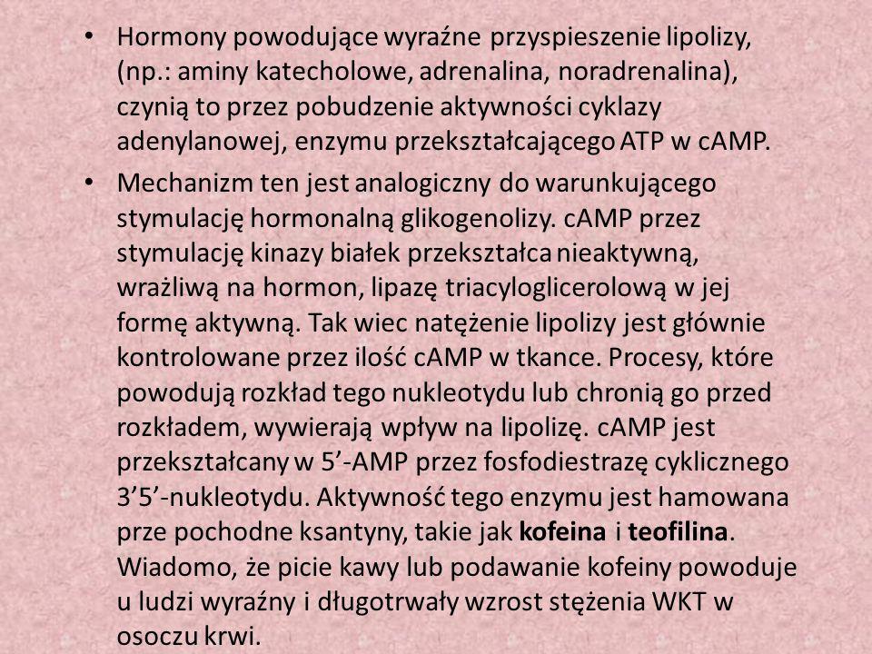 Hormony powodujące wyraźne przyspieszenie lipolizy, (np.: aminy katecholowe, adrenalina, noradrenalina), czynią to przez pobudzenie aktywności cyklazy