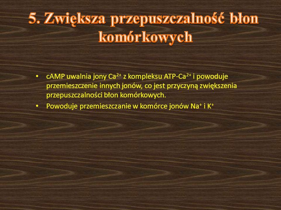 cAMP uwalnia jony Ca 2+ z kompleksu ATP-Ca 2+ i powoduje przemieszczenie innych jonów, co jest przyczyną zwiększenia przepuszczalności błon komórkowyc