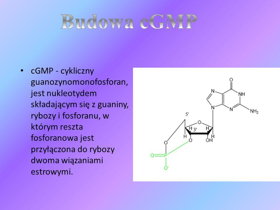 cGMP - cykliczny guanozynomonofosforan, jest nukleotydem składającym się z guaniny, rybozy i fosforanu, w którym reszta fosforanowa jest przyłączona d