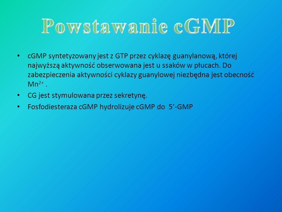 cGMP syntetyzowany jest z GTP przez cyklazę guanylanową, której najwyższą aktywność obserwowana jest u ssaków w płucach. Do zabezpieczenia aktywności
