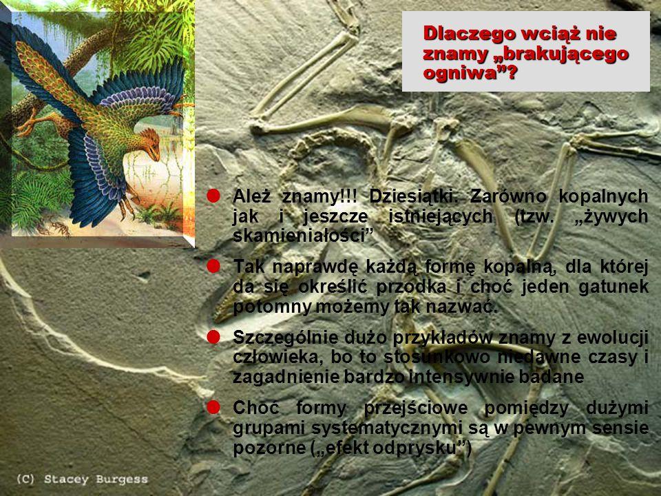 32 edukacja z internetem tpWarszawa, 3-4.12.2004 Wojciech Borkowski Dlaczego wciąż nie znamy brakującego ogniwa? Ależ znamy!!! Dziesiątki. Zarówno kop