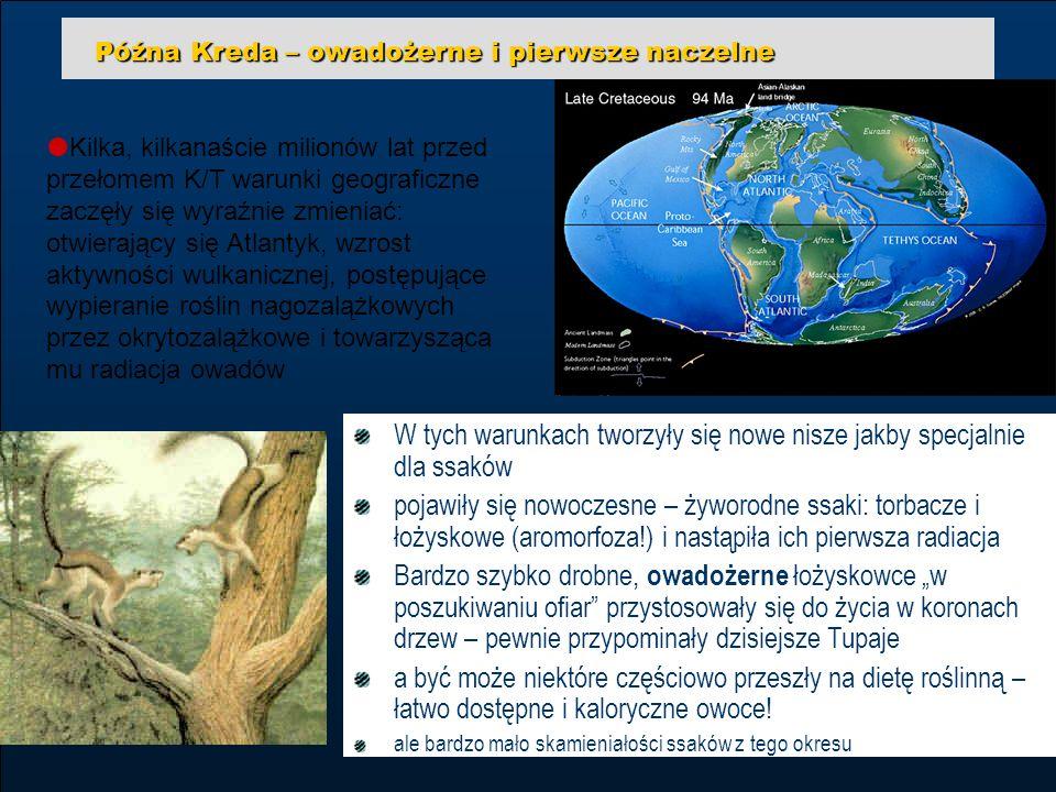 35 edukacja z internetem tpWarszawa, 3-4.12.2004 Wojciech Borkowski Późna Kreda – owadożerne i pierwsze naczelne Kilka, kilkanaście milionów lat przed