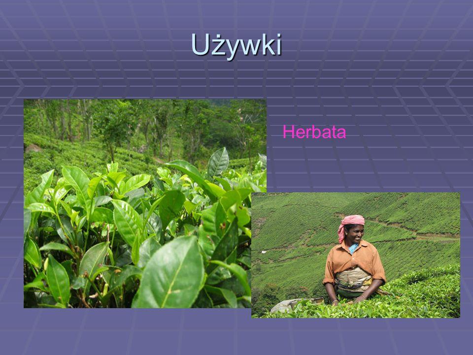 Używki Herbata