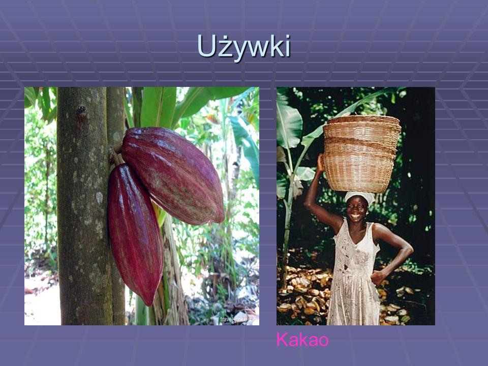 Używki Kakao