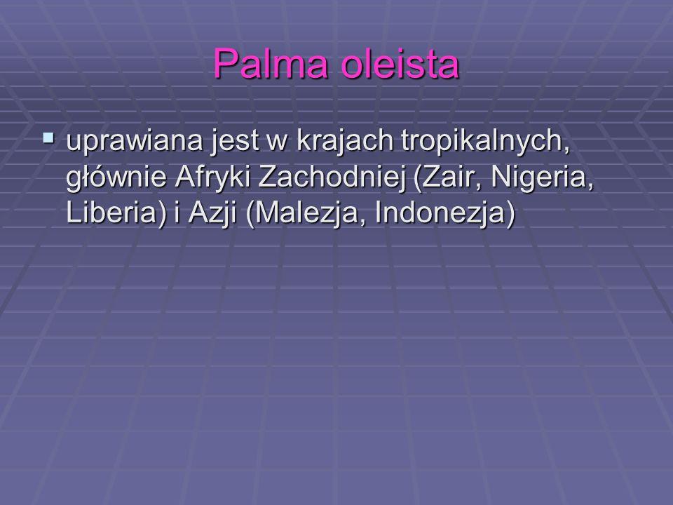 Palma oleista uprawiana jest w krajach tropikalnych, głównie Afryki Zachodniej (Zair, Nigeria, Liberia) i Azji (Malezja, Indonezja) uprawiana jest w k