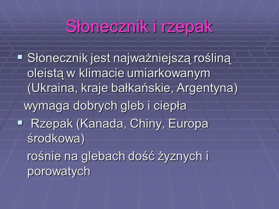 Słonecznik i rzepak Słonecznik jest najważniejszą rośliną oleistą w klimacie umiarkowanym (Ukraina, kraje bałkańskie, Argentyna) Słonecznik jest najwa