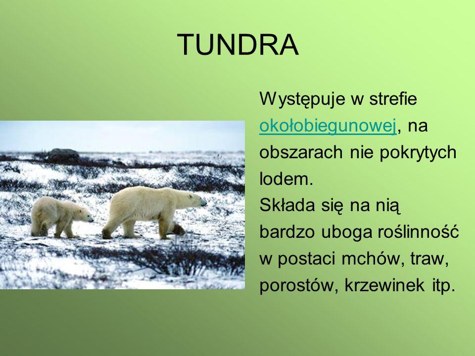 TUNDRA Występuje w strefie okołobiegunowejokołobiegunowej, na obszarach nie pokrytych lodem. Składa się na nią bardzo uboga roślinność w postaci mchów