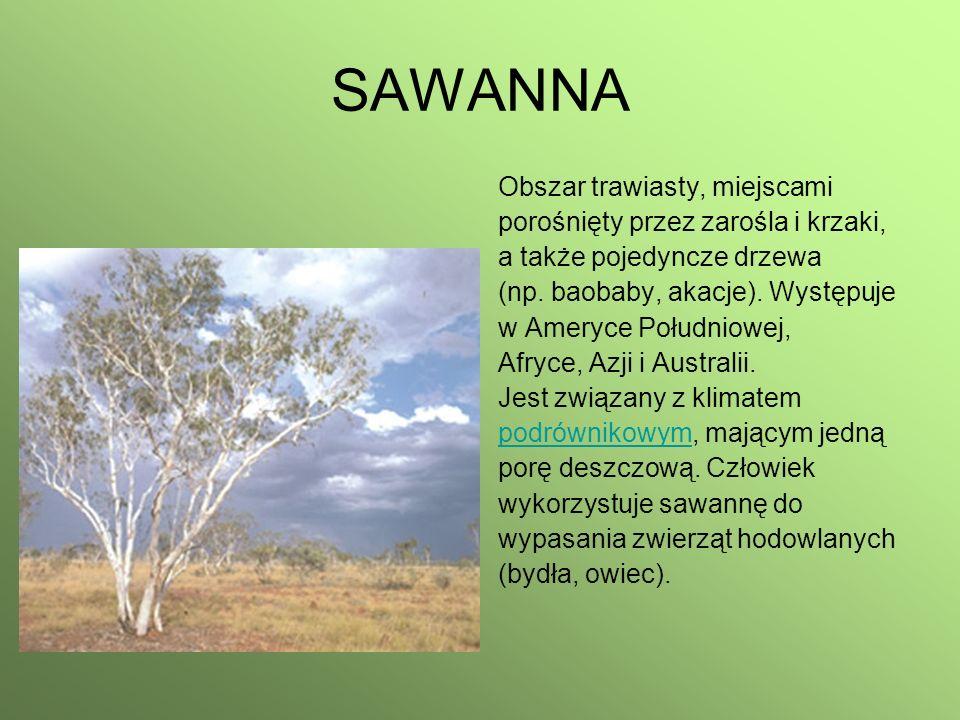 SAWANNA Obszar trawiasty, miejscami porośnięty przez zarośla i krzaki, a także pojedyncze drzewa (np. baobaby, akacje). Występuje w Ameryce Południowe