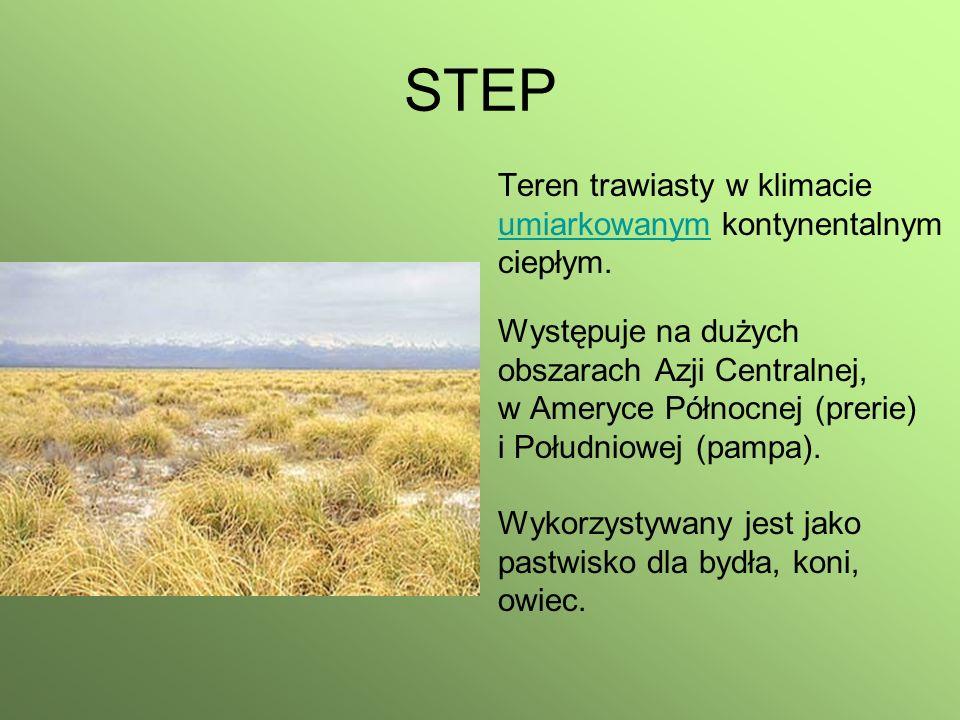 STEP Teren trawiasty w klimacie umiarkowanymumiarkowanym kontynentalnym ciepłym. Występuje na dużych obszarach Azji Centralnej, w Ameryce Północnej (p