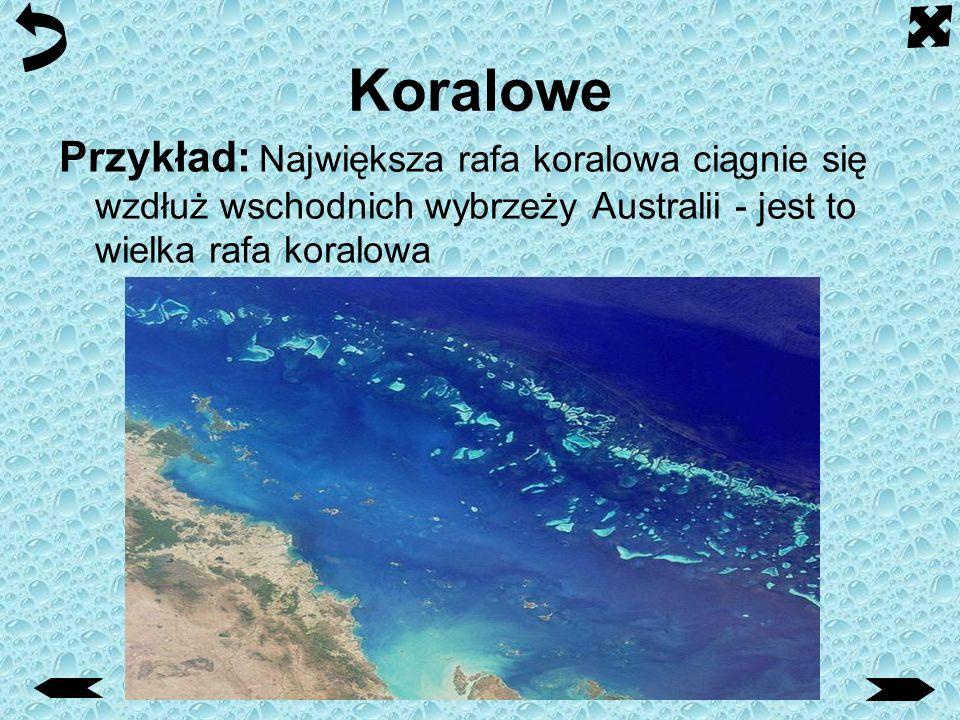 Koralowe Niedaleko brzegu tworzy się bariera - rafa koralowa, która nie pozwala na niszczenie wybrzeży.