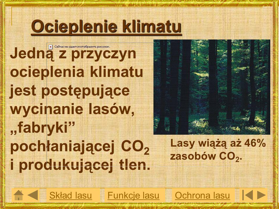 Ocieplenie klimatu Jedną z przyczyn ocieplenia klimatu jest postępujące wycinanie lasów, fabryki pochłaniającej CO 2 i produkującej tlen. Funkcje lasu