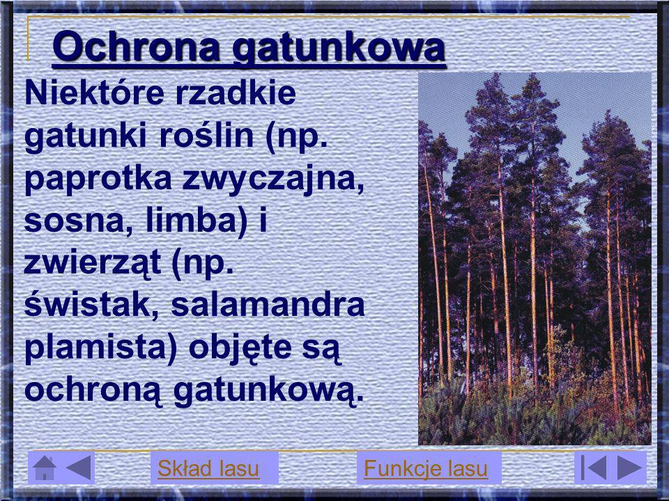 Ochrona gatunkowa Niektóre rzadkie gatunki roślin (np. paprotka zwyczajna, sosna, limba) i zwierząt (np. świstak, salamandra plamista) objęte są ochro