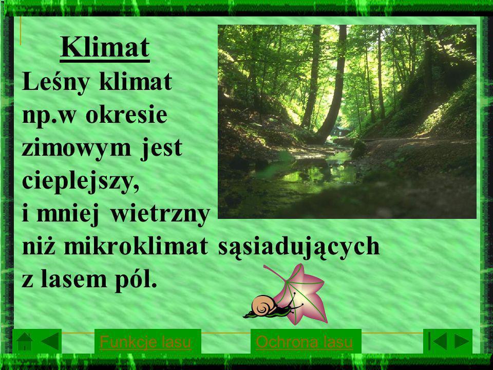 Klimat Leśny klimat np.w okresie zimowym jest cieplejszy, i mniej wietrzny niż mikroklimat sąsiadujących z lasem pól. Funkcje lasuOchrona lasu