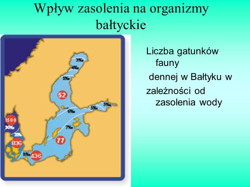 Wpływ zasolenia na organizmy bałtyckie Liczba gatunków fauny dennej w Bałtyku w zależności od zasolenia wody