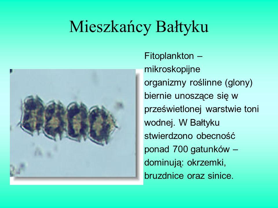 Mieszkańcy Bałtyku Fitoplankton – mikroskopijne organizmy roślinne (glony) biernie unoszące się w prześwietlonej warstwie toni wodnej. W Bałtyku stwie