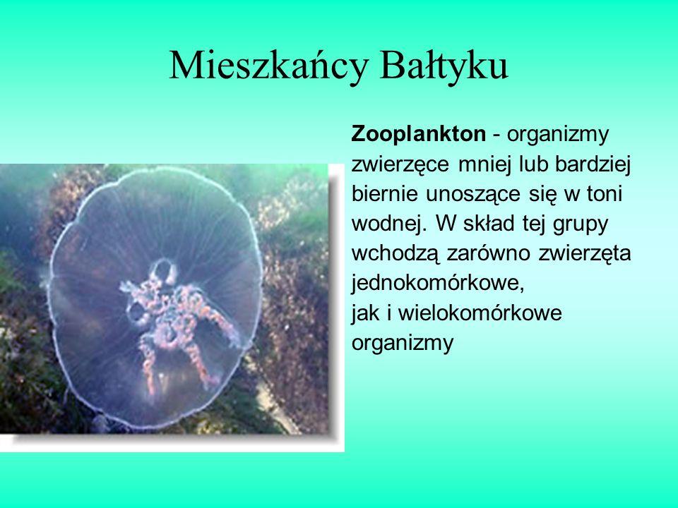 Mieszkańcy Bałtyku Zooplankton - organizmy zwierzęce mniej lub bardziej biernie unoszące się w toni wodnej. W skład tej grupy wchodzą zarówno zwierzęt