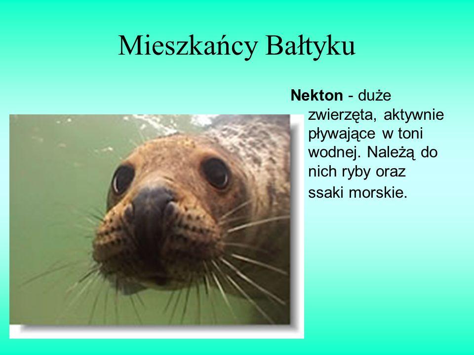 Mieszkańcy Bałtyku Nekton - duże zwierzęta, aktywnie pływające w toni wodnej. Należą do nich ryby oraz ssaki morskie.