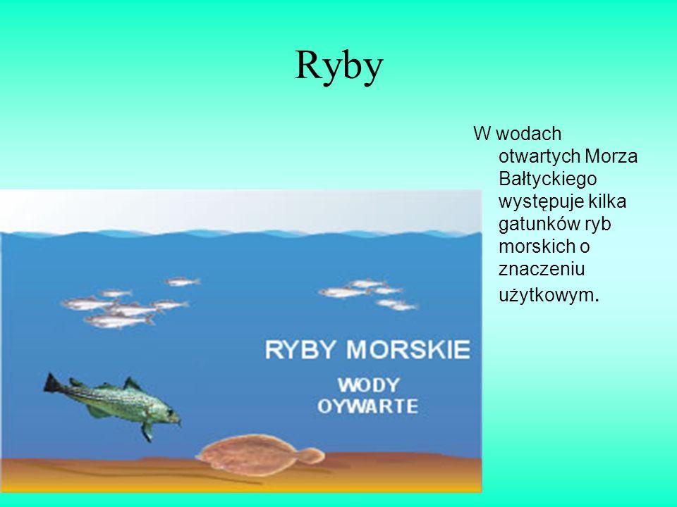 Ryby W wodach otwartych Morza Bałtyckiego występuje kilka gatunków ryb morskich o znaczeniu użytkowym.