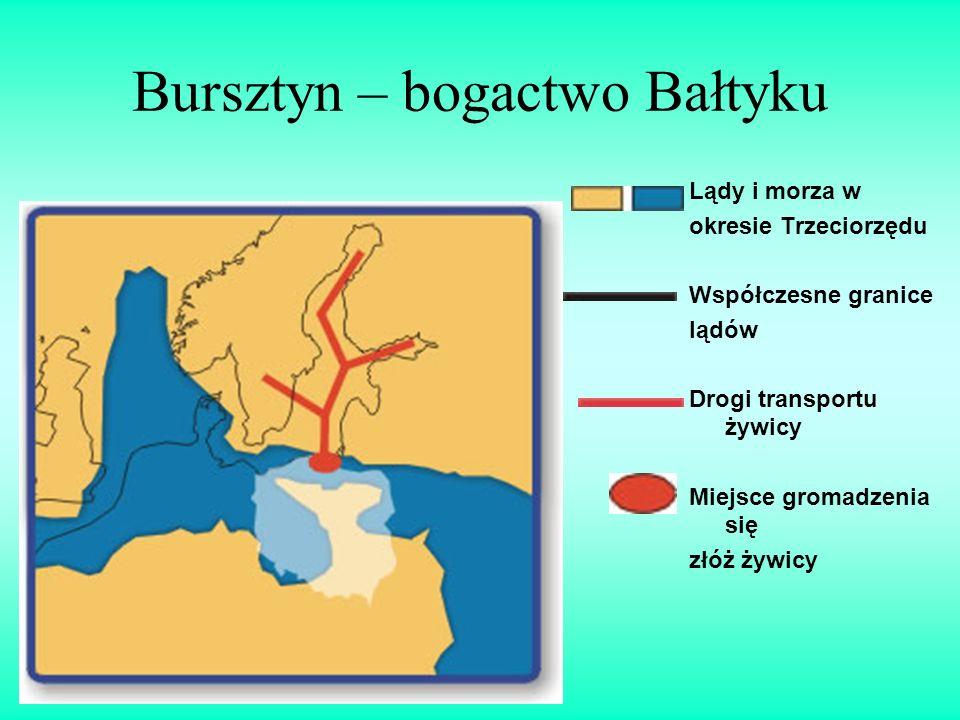 Bursztyn – bogactwo Bałtyku Lądy i morza w okresie Trzeciorzędu Współczesne granice lądów Drogi transportu żywicy Miejsce gromadzenia się złóż żywicy