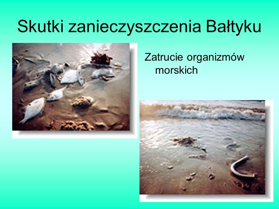 Skutki zanieczyszczenia Bałtyku Zatrucie organizmów morskich
