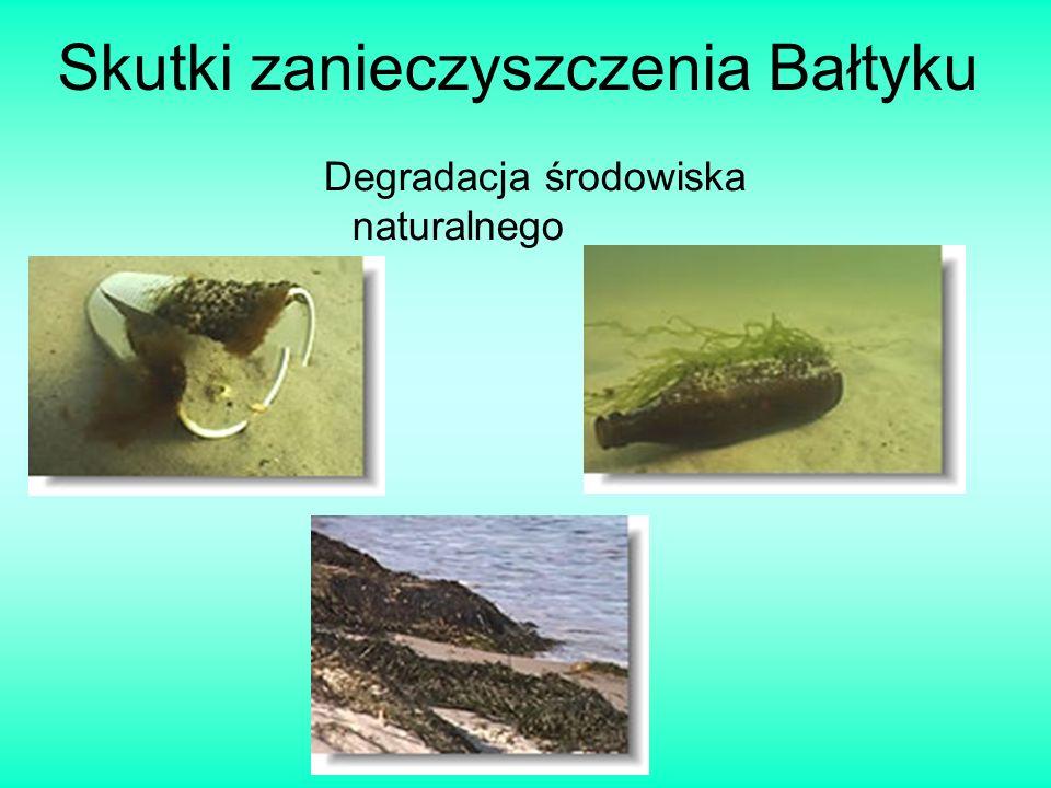 Skutki zanieczyszczenia Bałtyku Degradacja środowiska naturalnego