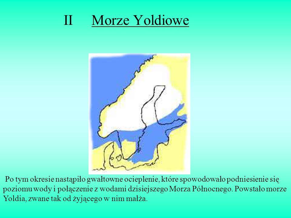 II Morze Yoldiowe Po tym okresie nastąpiło gwałtowne ocieplenie, które spowodowało podniesienie się poziomu wody i połączenie z wodami dzisiejszego Mo