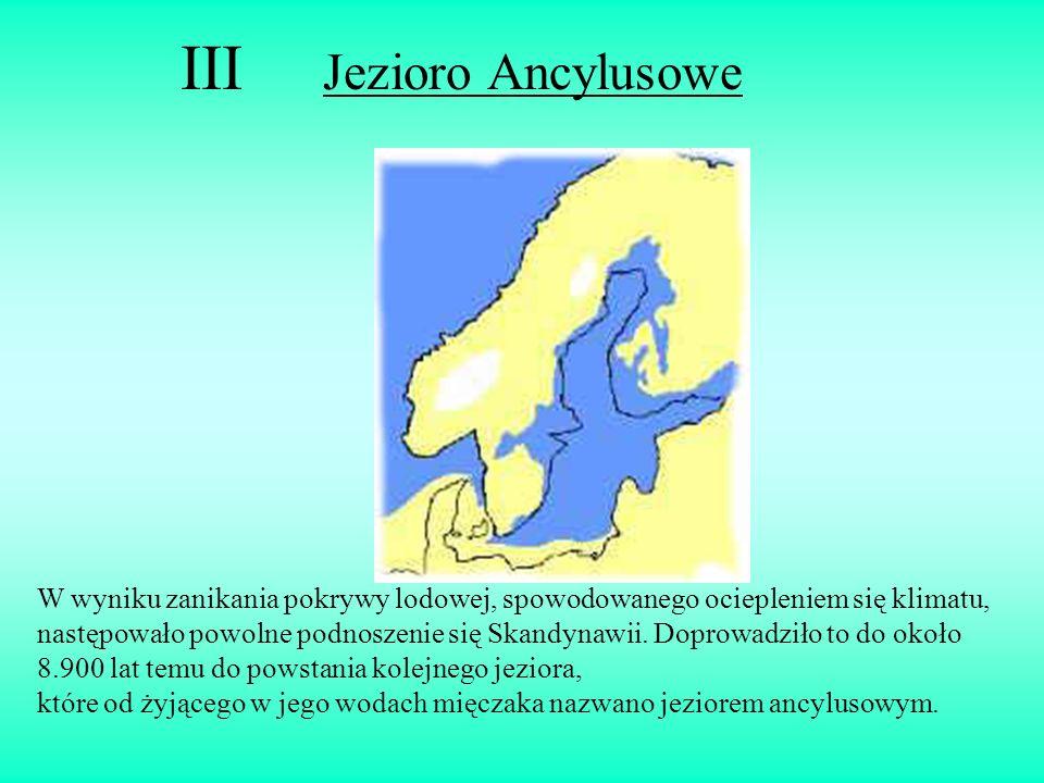 III Jezioro Ancylusowe W wyniku zanikania pokrywy lodowej, spowodowanego ociepleniem się klimatu, następowało powolne podnoszenie się Skandynawii. Dop