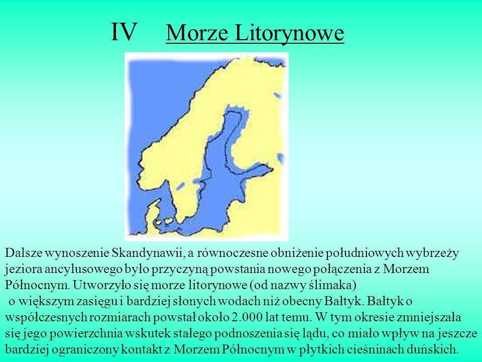 IV Morze Litorynowe Dalsze wynoszenie Skandynawii, a równoczesne obniżenie południowych wybrzeży jeziora ancylusowego było przyczyną powstania nowego