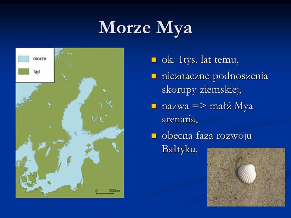 Morze Mya ok. 1tys. lat temu, nieznaczne podnoszenia skorupy ziemskiej, nazwa => małż Mya arenaria, obecna faza rozwoju Bałtyku.