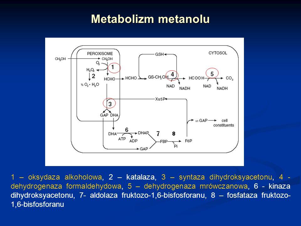 Metabolizm metanolu 1 – oksydaza alkoholowa, 2 – katalaza, 3 – syntaza dihydroksyacetonu, 4 - dehydrogenaza formaldehydowa, 5 – dehydrogenaza mrówczan