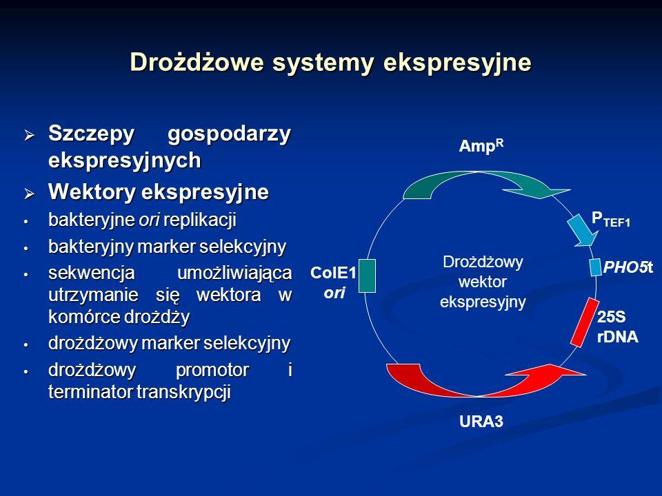 Drożdżowe systemy ekspresyjne Szczepy gospodarzy ekspresyjnych Szczepy gospodarzy ekspresyjnych Wektory ekspresyjne Wektory ekspresyjne bakteryjne ori