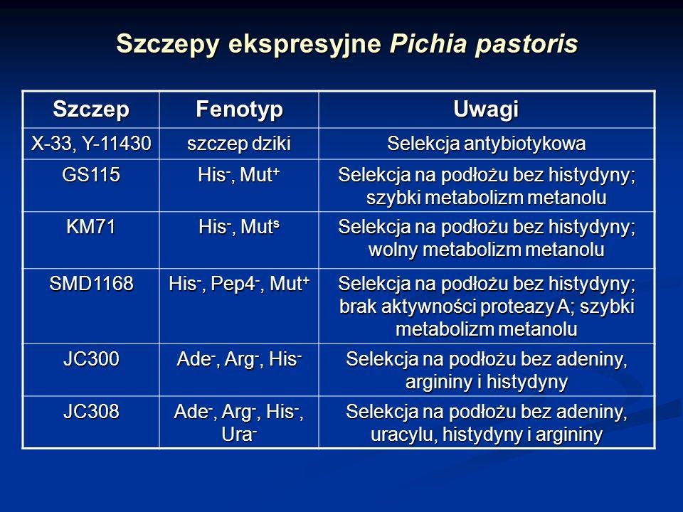 Szczepy ekspresyjne Pichia pastoris SzczepFenotypUwagi X-33, Y-11430 szczep dziki Selekcja antybiotykowa GS115 His -, Mut + Selekcja na podłożu bez hi