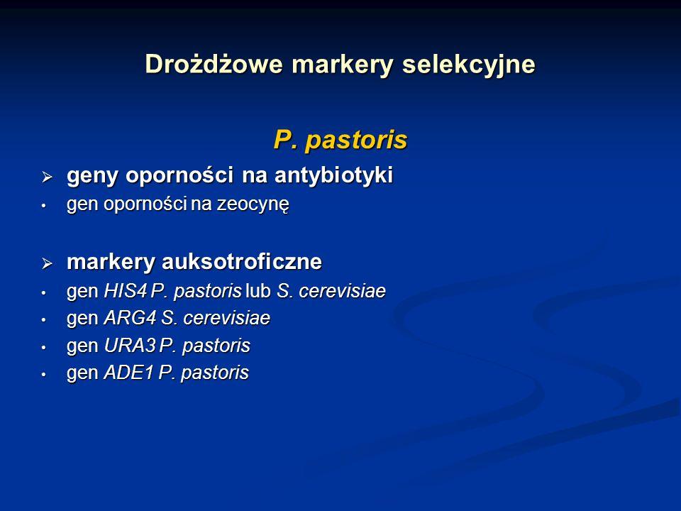 Drożdżowe markery selekcyjne P. pastoris geny oporności na antybiotyki geny oporności na antybiotyki gen oporności na zeocynę gen oporności na zeocynę