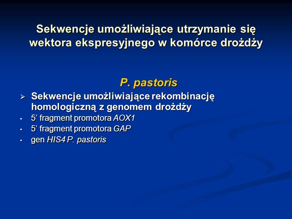 Sekwencje umożliwiające utrzymanie się wektora ekspresyjnego w komórce drożdży P. pastoris Sekwencje umożliwiające rekombinację homologiczną z genomem