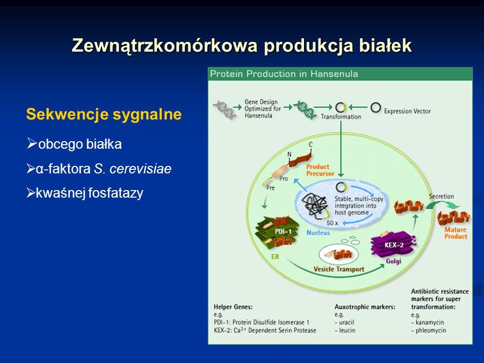 Zewnątrzkomórkowa produkcja białek Sekwencje sygnalne obcego białka α-faktora S. cerevisiae kwaśnej fosfatazy