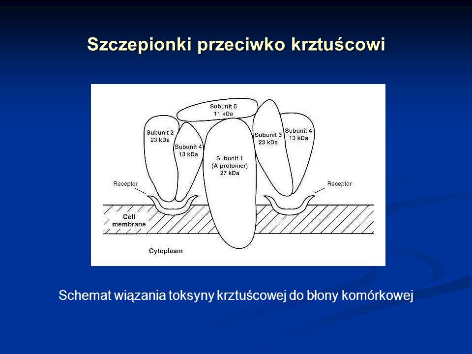 Szczepionka przeciwko tężcowi Tężec ostra choroba układu nerwowego wywoływana przez tetanospazminę ostra choroba układu nerwowego wywoływana przez tetanospazminę Objawy Objawy napadowe skurcze mięśni (głównie oddechowych i przebiegających wzdłuż kregosłupa)napadowe skurcze mięśni (głównie oddechowych i przebiegających wzdłuż kregosłupa) wysoka gorączkawysoka gorączka śmiertelność – 40% zakażonych