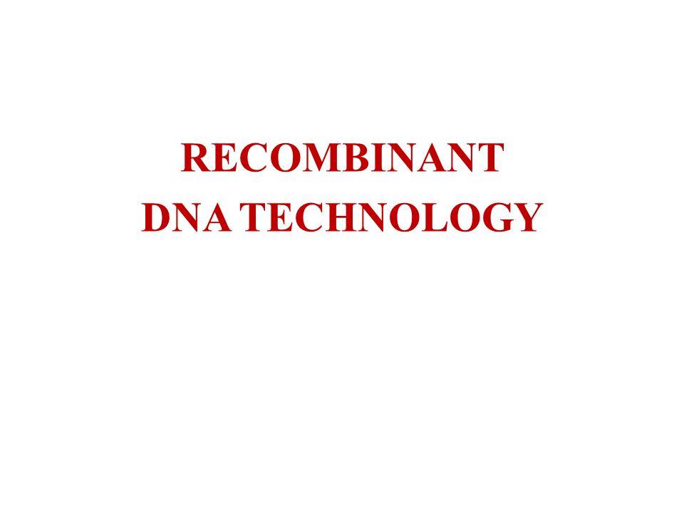 ENZYMY RESTRYKCYJNE Podział restryktaz według sekwencji rozpoznawanej: czwórkowe, rozpoznają sekwencję DNA złożoną z czterech nukleotydów Statystycznie w dowolnym DNA takich miejsc jest dużo - co 256 pz.