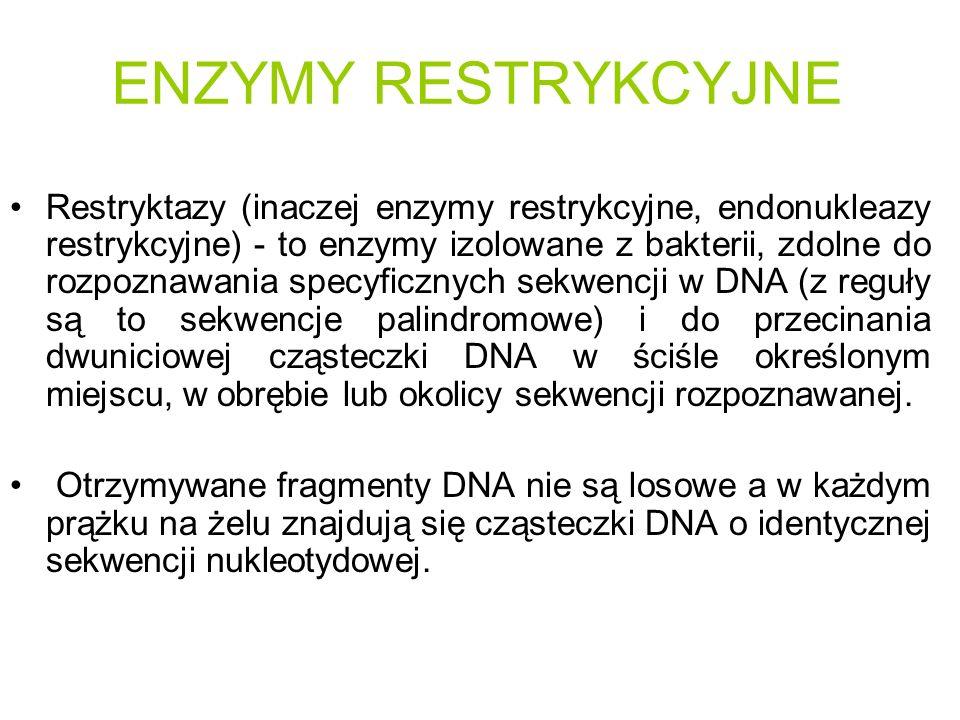 ENZYMY RESTRYKCYJNE Restryktazy (inaczej enzymy restrykcyjne, endonukleazy restrykcyjne) - to enzymy izolowane z bakterii, zdolne do rozpoznawania spe