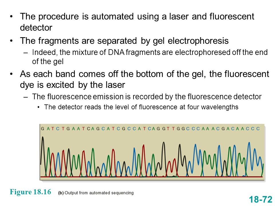 The procedure is automated using a laser and fluorescent detector The fragments are separated by gel electrophoresis –Indeed, the mixture of DNA fragm
