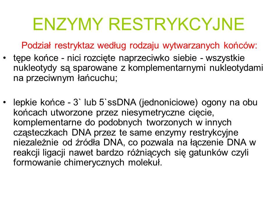 ENZYMY RESTRYKCYJNE Podział restryktaz według rodzaju wytwarzanych końców: tępe końce - nici rozcięte naprzeciwko siebie - wszystkie nukleotydy są sparowane z komplementarnymi nukleotydami na przeciwnym łańcuchu; lepkie końce - 3` lub 5`ssDNA (jednoniciowe) ogony na obu końcach utworzone przez niesymetryczne cięcie, komplementarne do podobnych tworzonych w innych cząsteczkach DNA przez te same enzymy restrykcyjne niezależnie od źródła DNA, co pozwala na łączenie DNA w reakcji ligacji nawet bardzo różniących się gatunków czyli formowanie chimerycznych molekuł.