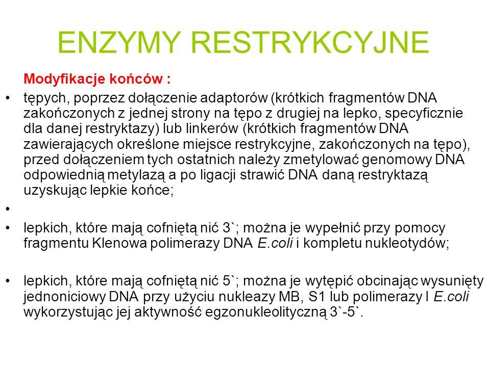 ENZYMY RESTRYKCYJNE Modyfikacje końców : tępych, poprzez dołączenie adaptorów (krótkich fragmentów DNA zakończonych z jednej strony na tępo z drugiej na lepko, specyficznie dla danej restryktazy) lub linkerów (krótkich fragmentów DNA zawierających określone miejsce restrykcyjne, zakończonych na tępo), przed dołączeniem tych ostatnich należy zmetylować genomowy DNA odpowiednią metylazą a po ligacji strawić DNA daną restryktazą uzyskując lepkie końce; lepkich, które mają cofniętą nić 3`; można je wypełnić przy pomocy fragmentu Klenowa polimerazy DNA E.coli i kompletu nukleotydów; lepkich, które mają cofniętą nić 5`; można je wytępić obcinając wysunięty jednoniciowy DNA przy użyciu nukleazy MB, S1 lub polimerazy I E.coli wykorzystując jej aktywność egzonukleolityczną 3`-5`.