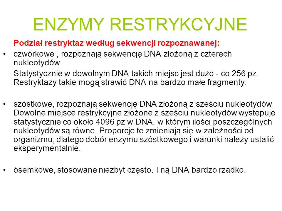 ENZYMY RESTRYKCYJNE Podział restryktaz według sekwencji rozpoznawanej: czwórkowe, rozpoznają sekwencję DNA złożoną z czterech nukleotydów Statystyczni