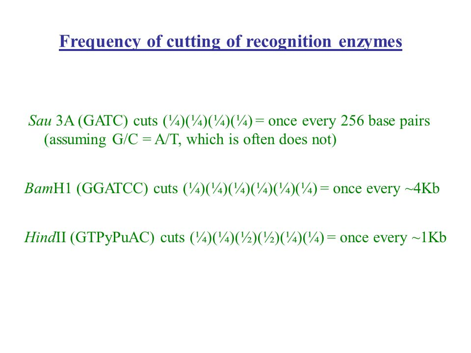 Frequency of cutting of recognition enzymes Sau 3A (GATC) cuts (¼)(¼)(¼)(¼) = once every 256 base pairs (assuming G/C = A/T, which is often does not)