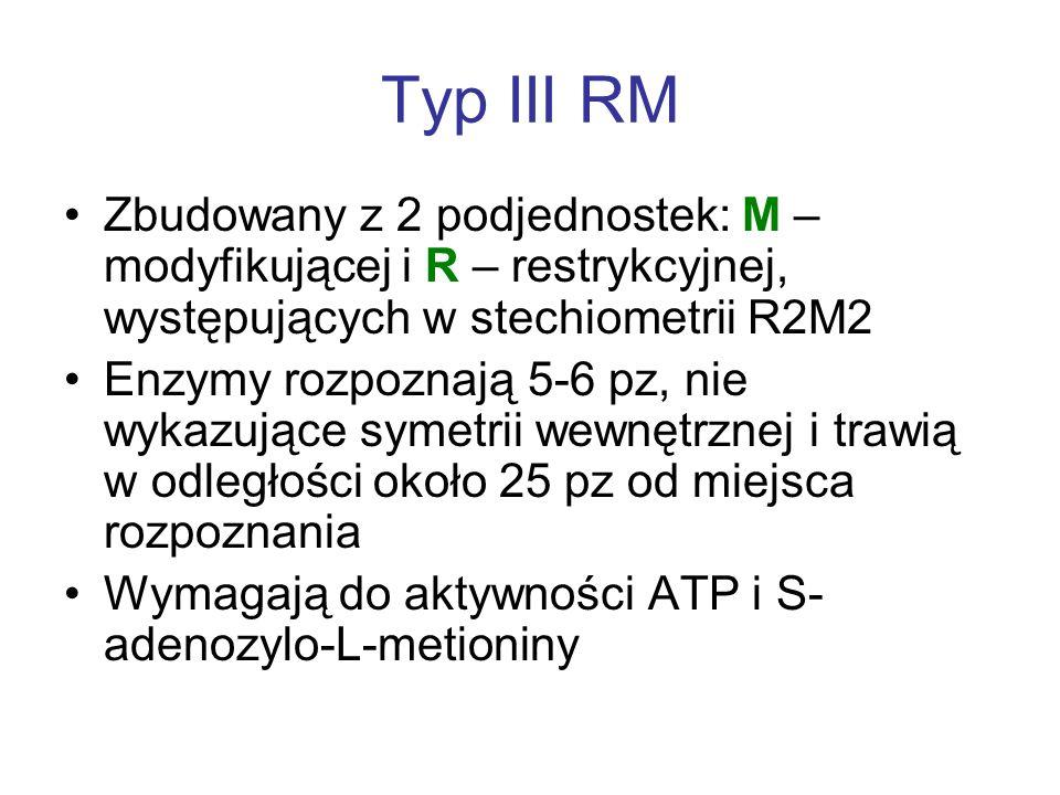 Typ III RM Zbudowany z 2 podjednostek: M – modyfikującej i R – restrykcyjnej, występujących w stechiometrii R2M2 Enzymy rozpoznają 5-6 pz, nie wykazujące symetrii wewnętrznej i trawią w odległości około 25 pz od miejsca rozpoznania Wymagają do aktywności ATP i S- adenozylo-L-metioniny
