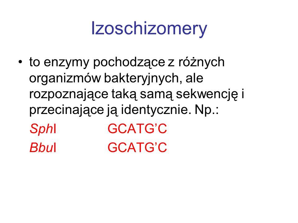 Izoschizomery to enzymy pochodzące z różnych organizmów bakteryjnych, ale rozpoznające taką samą sekwencję i przecinające ją identycznie. Np.: SphI GC