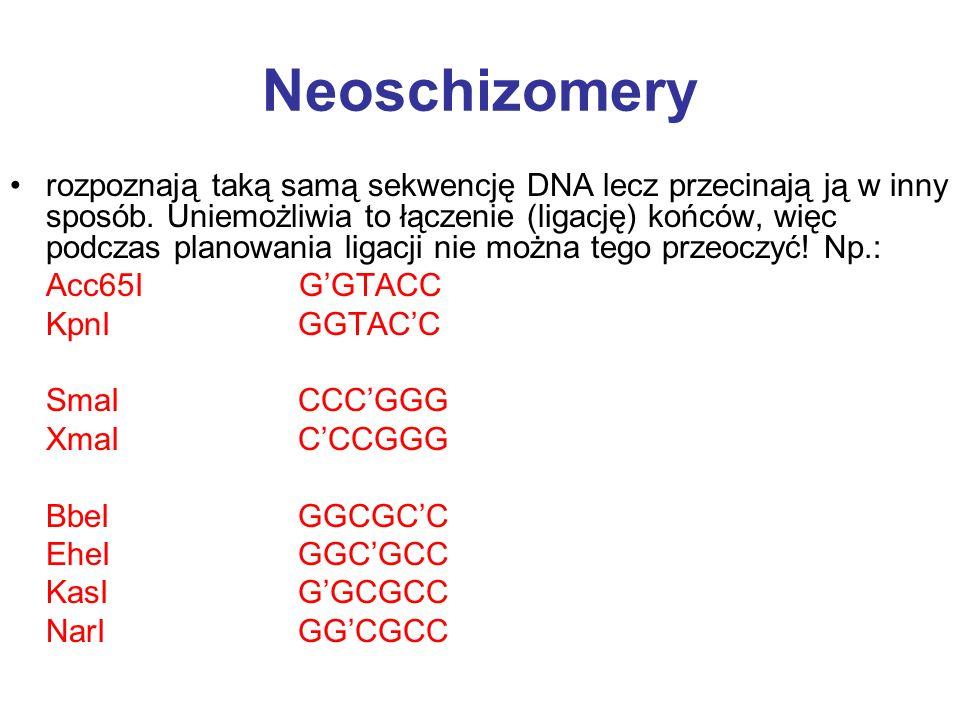Neoschizomery rozpoznają taką samą sekwencję DNA lecz przecinają ją w inny sposób. Uniemożliwia to łączenie (ligację) końców, więc podczas planowania